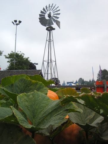 Giant pumpkins in the wild!