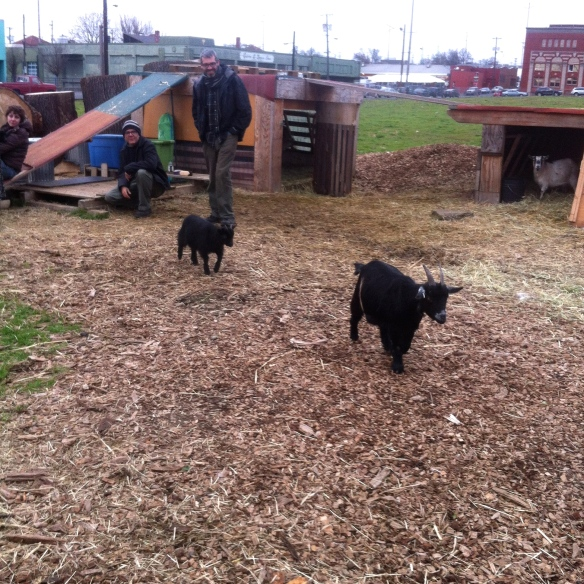 Baby Goats in PDX