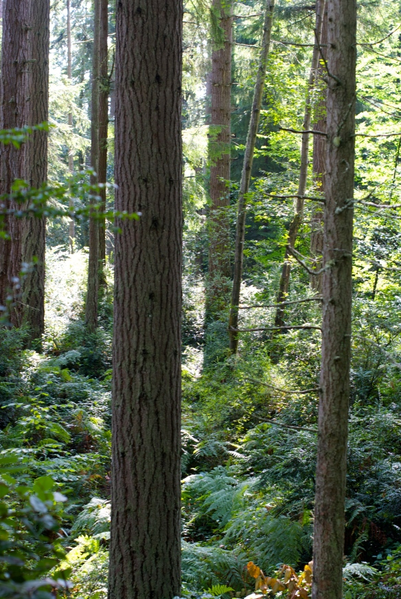Island Center Forest, Vashon Island