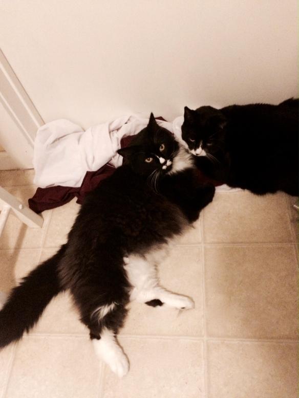 Tuxedo kitties, Gus Gus and Lucifer
